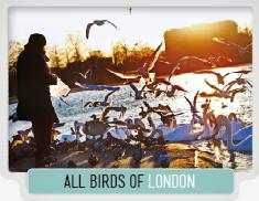 33_LONDON