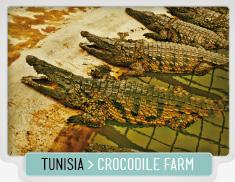 37_crocodile farm