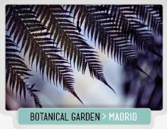 MADRID_BOTANICAL_GARDEN