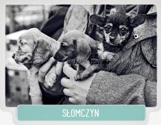 SLOMCZYN